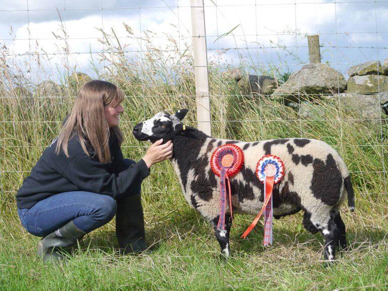 Little Rowater Lambs Win At Turriff Show 2019